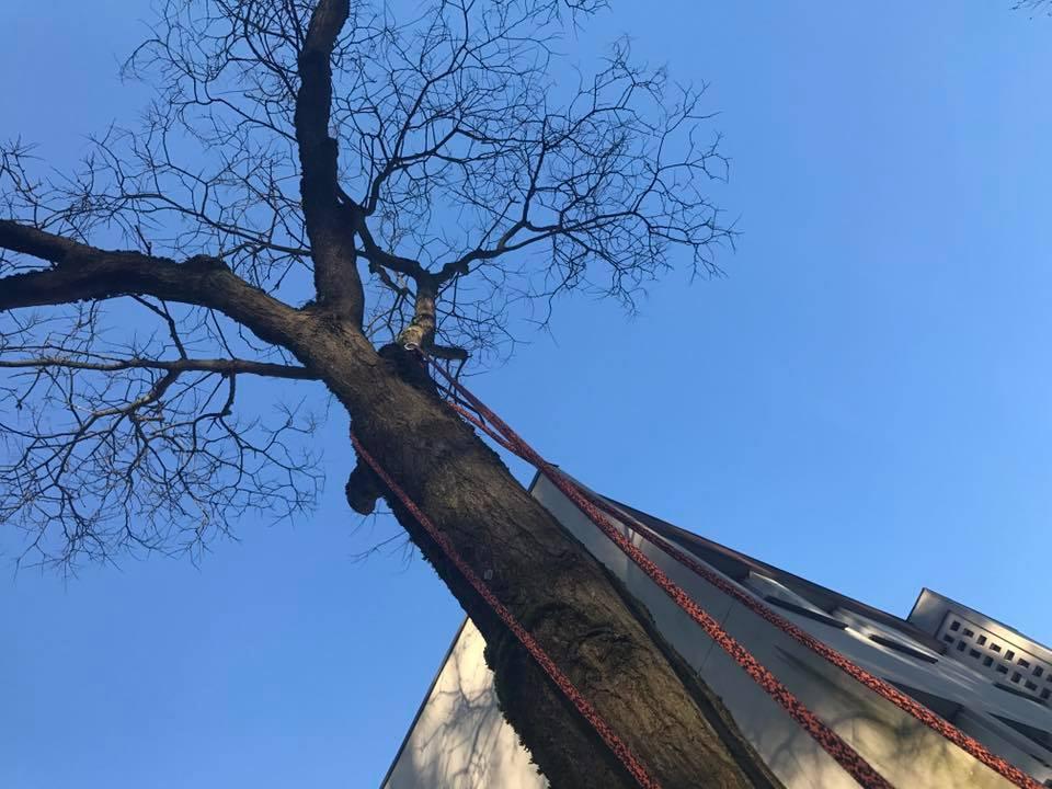talles-soins-arbre-oise